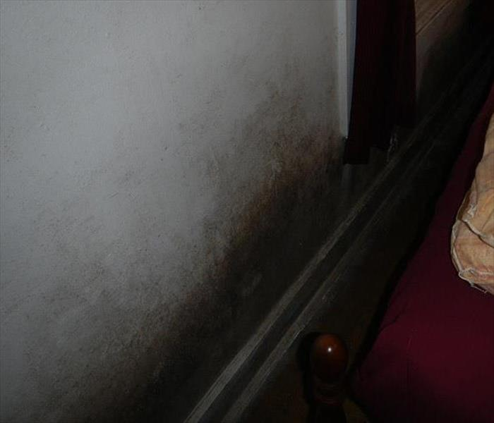 Mold Remediation Pitt and Greene County Residents:  Follow These Mold Safety Tips If You Suspect Mold